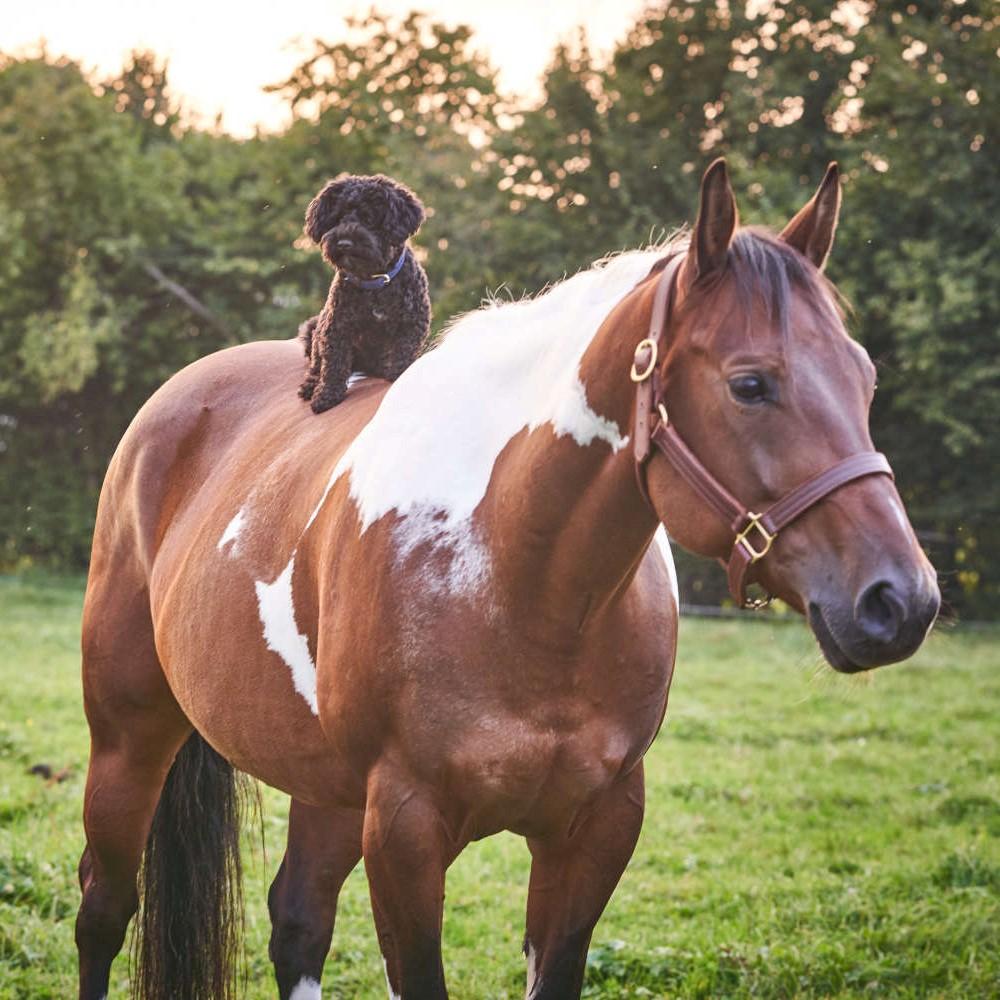 Emotionscode aengstliche Pferde Hund bissig