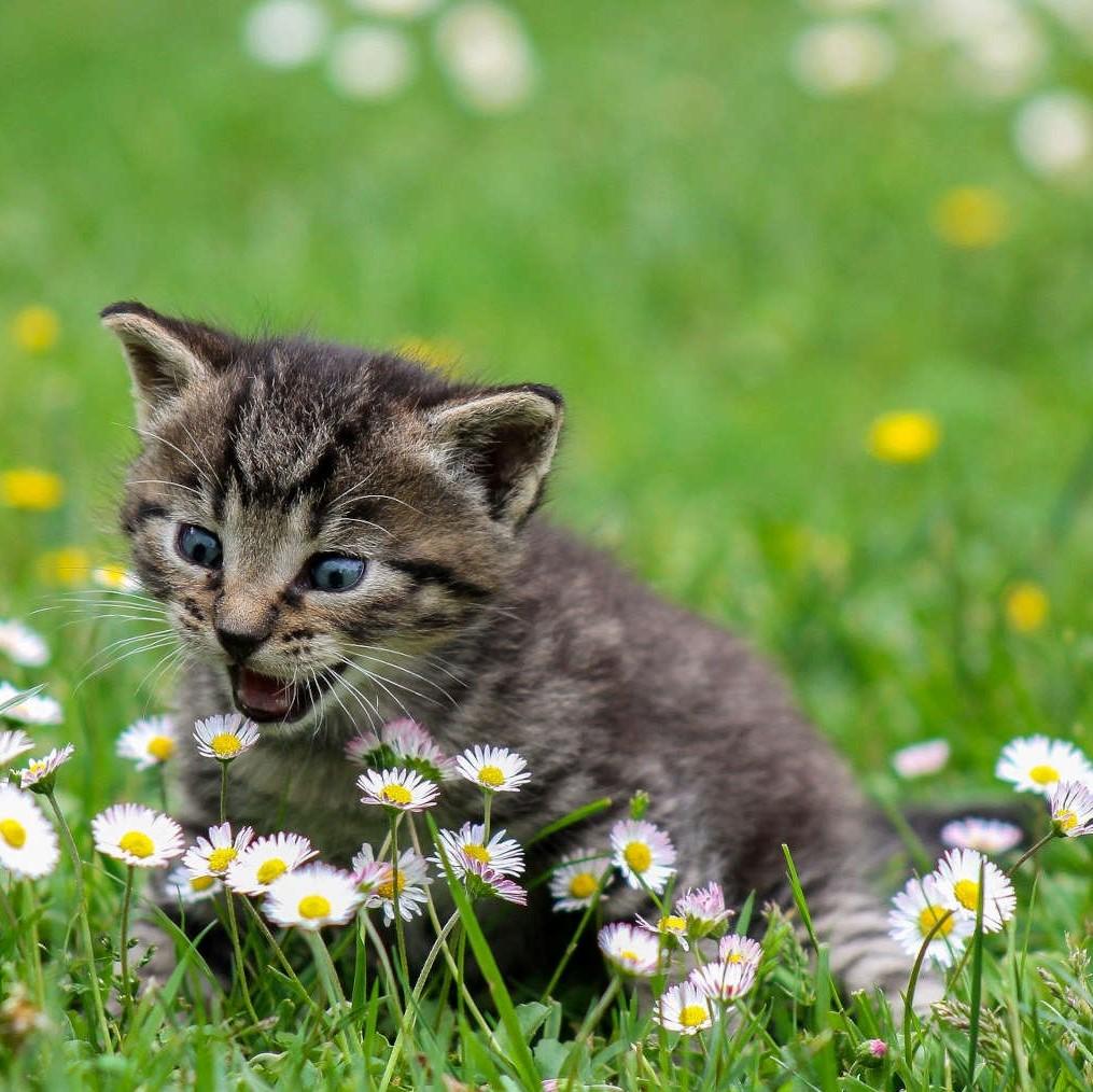Emotionscode Tiere Katze Verhaltensauffälligkeiten
