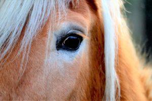 Pferd Panik Angst Blockaden