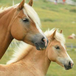 Verlasspferd Problempferd Pferd