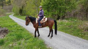 agressives Pferd ängstliches pferd traumatisiertes pferd