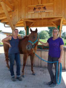Hängerunfall, traum beim Pferd, Ängste, Problempferd, Seelenpferd