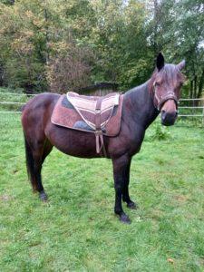 Ängstliches pferd entspanntes Pferd Einreiten